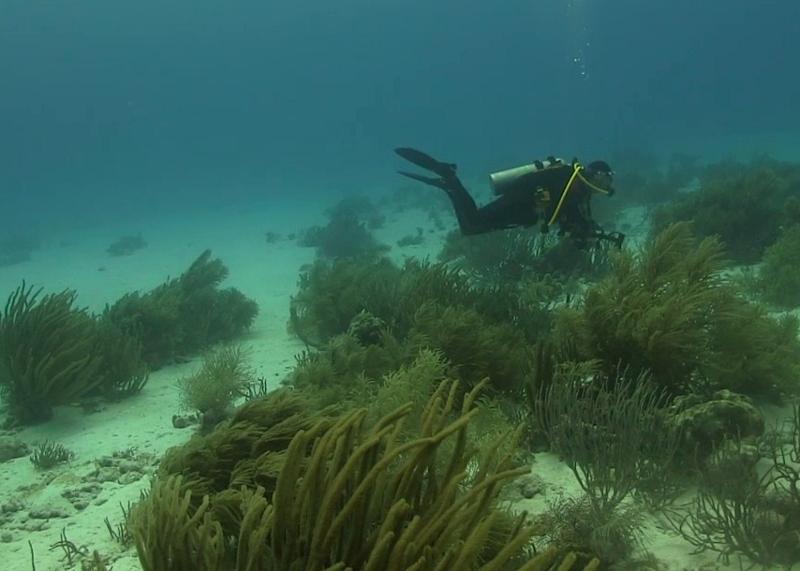 course-buoyancy.jpg