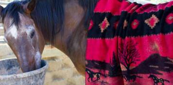Red Running Horses/Black #615 50x60 Inch Throw Blanket