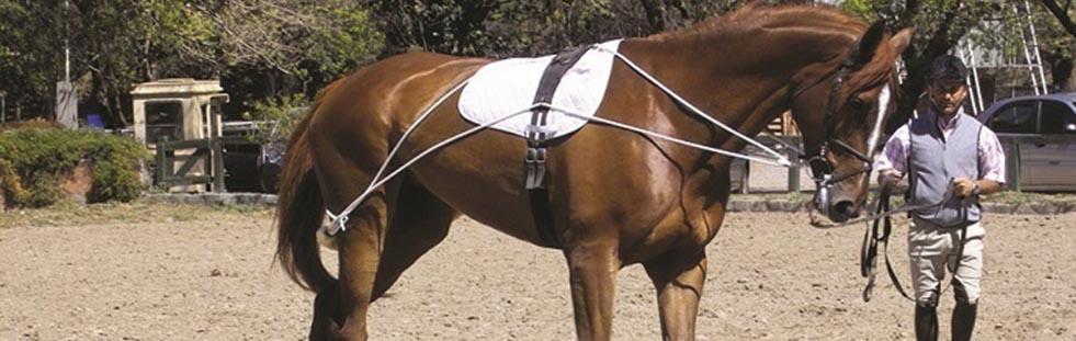 accessories-equestrian-banner.jpg
