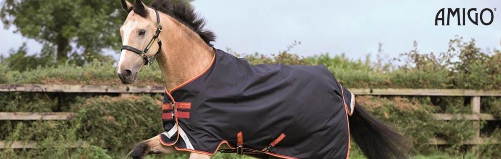 amigo-equestrian-banner.jpg