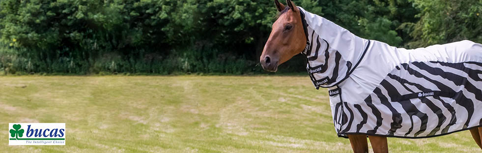 bucas-equestrian-bannera.jpg