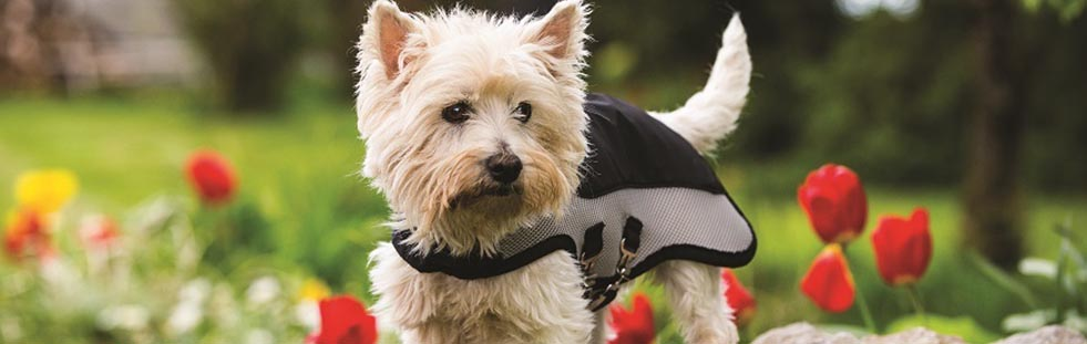 dog-coat-equestrian-banner.jpg