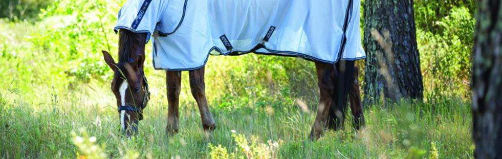 horse-equestrian-bannera.jpg