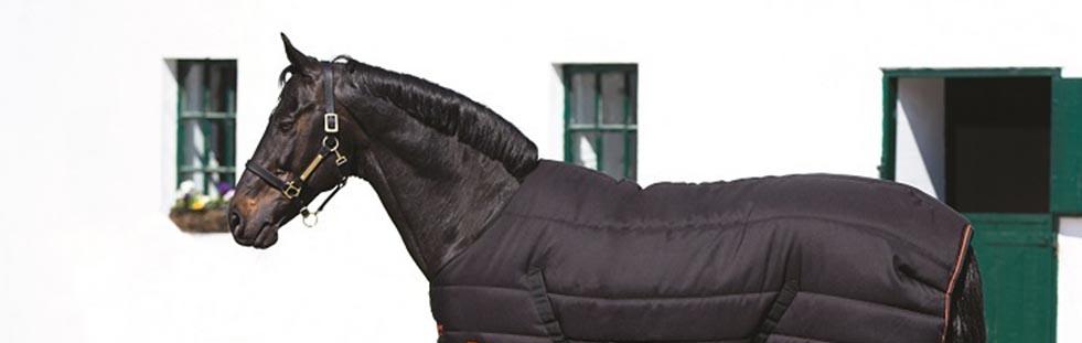 horse-health-equestrian-bannera.jpg