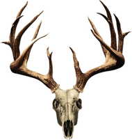 Mossy Oak Skull Series Whitetail Non Typical Decal