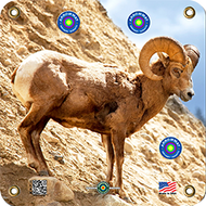 Arrowmat Big Horn Sheep Target 17x17 - 3 Pack Paper Targets