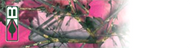 """Bohning Blazer Wrap 4"""" Pink Camo HD - 12 Pieces"""