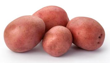 Red Potato  10 lbs