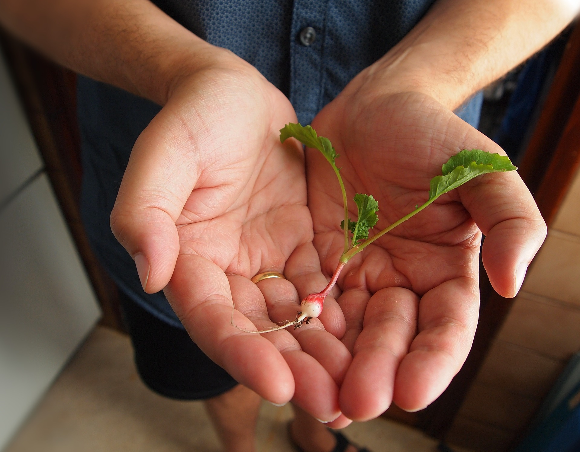 Photo of man holding tiny radish in his hands