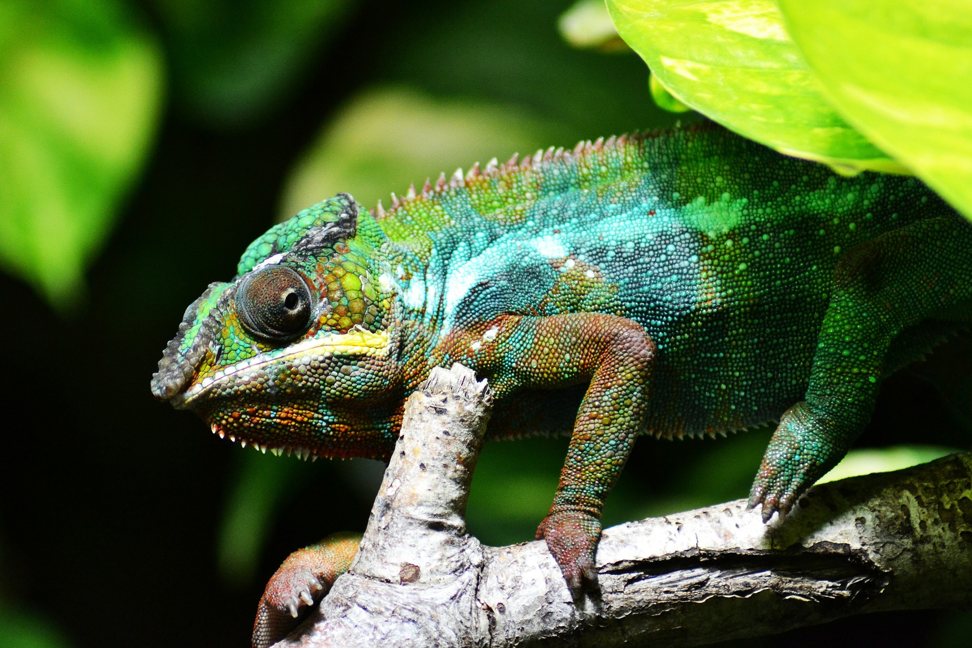 Side view photo of chameleon on branch