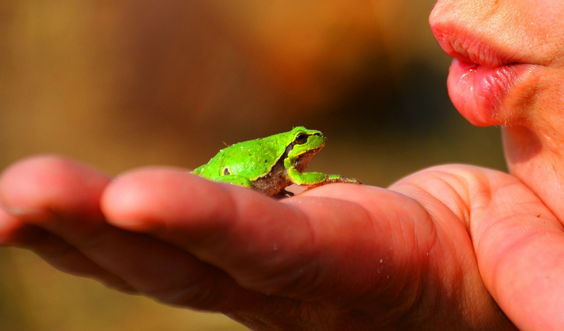 Photo of small frog in a palm