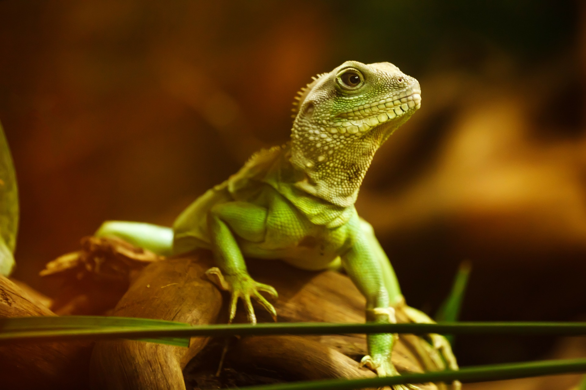 Photo of green lizard on branch in enclosure