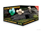 Glow Mushrooms
