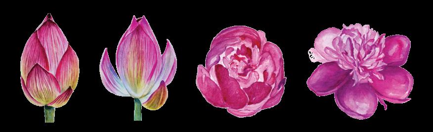 flower-set-png.png