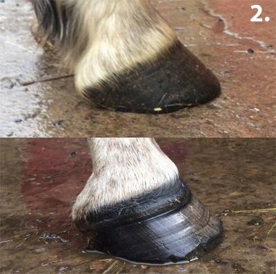 kate-sanderson-hooves-2.jpg