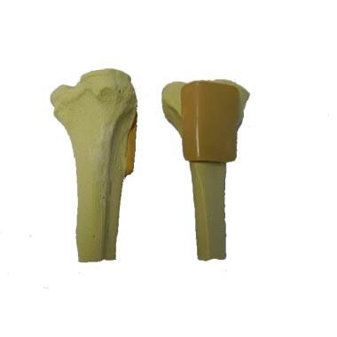 Tibia Bone for training
