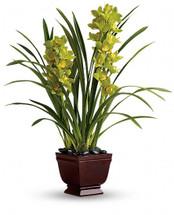 Splendid Orchids