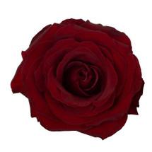 Wholesale bulk flowers wholesale silk flowers rose blackpearl 50cm rprima mightylinksfo