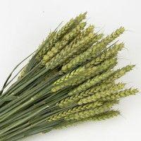 Wheat Green breaded cramer
