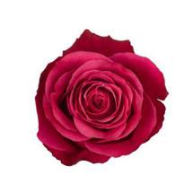 Rose Cherry O 50cm rprima