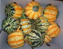Pumpkin FestivalSquash raabs(c