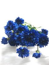 Cornflower dark blue bush each