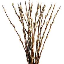 P.willow Catkins 7-8ft kraemer
