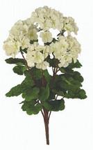 Silk geranium wht bush x6 SB20