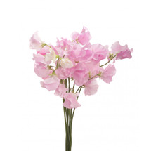 Sweet Pea LtPk by