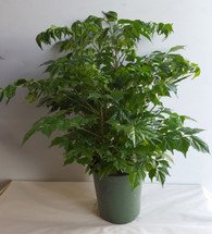 """6"""" POTTED CH-DOLL"""