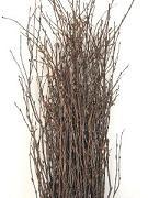 Branch Birch Medium oregon