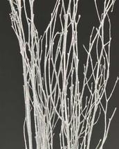 Birch Glitter White 3-4' 5stm