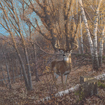 Natures Plan      by Micheal Seive (Deer)