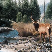 Elk  (artist Patrick Gibbs)