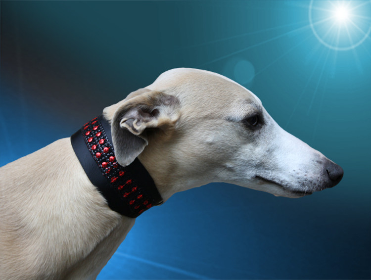 adored scarlett kisses whippet collar