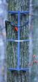 "Rivers Edge RE718 Grip Stick Single - Climbing Stick 300Lb Capacity 32"" - RE718"