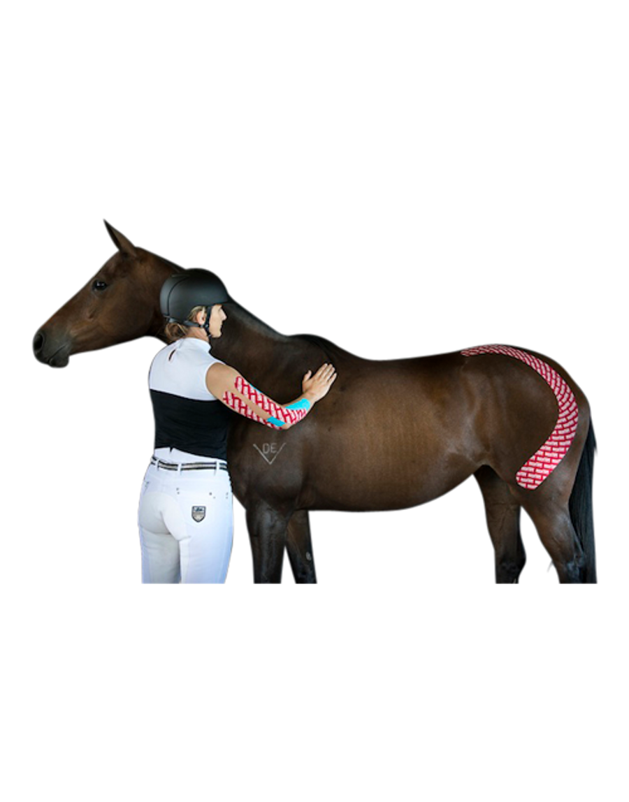 Equine Taping Guide