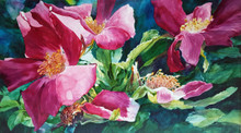 "For a Single Instant  Original watercolor by Karen Vernon  Transparent watercolor on museum grade Aquabord by Ampersand Art Supply  24"" x 42""  Wild roses  Ships unframed.  Ships in USA only"