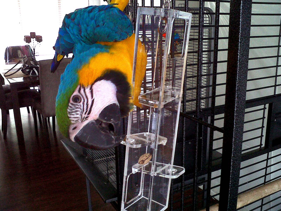 Blue and Gold Macaw with Birdy Plunk Forage Large