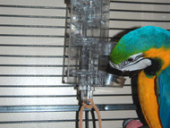 Blue and Gold Macaw using the Tug n Slide Tower foraging toy