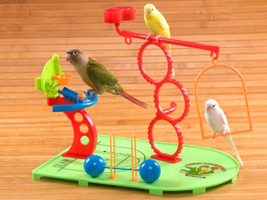 Budgies and Conure on the Birdy Basketball play gym