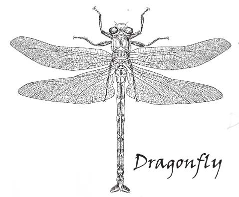 SD626 Dragonfly