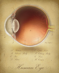 Vintage Lateral Eye Print