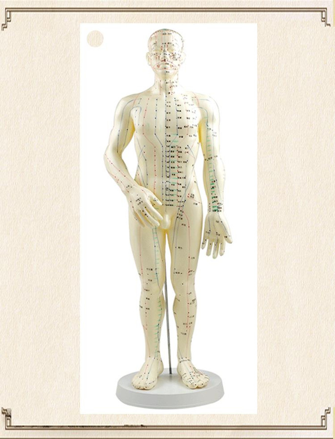 """20"""" HUMAN ACUPUNCTURE MODEL"""