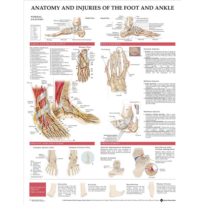 """ANATOMY AND INJURIES OF THE FOOT AND ANKLE CHART 20""""W X 26"""" H, STYRENE"""