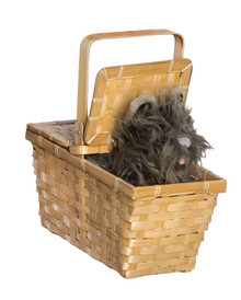 Wizard of Oz Licensed Toto in a Deluxe Wicker Basket