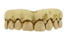 /skeleton-teeth-billy-bob/