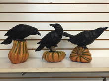 Crow on a Pumpkin Decor 3 Different Poses