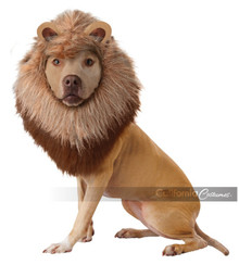 Lion Dog Costume Licensed Animal Planet