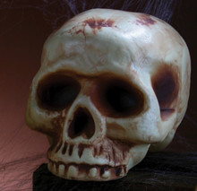 "Skull Acrylic Prop 8"" No Jaw Bone"